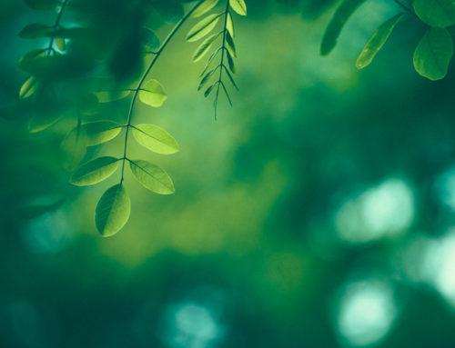 「國產材驗證制度」及「國有林產物標售投標資格」座談會