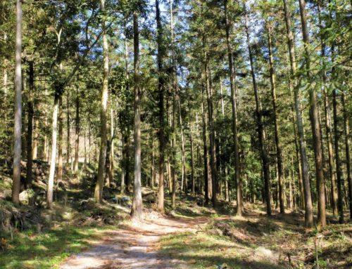 國產材向前衝!2019年木材自給率提升到1.2%,規劃伐採600公頃國有林