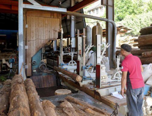 國產材復興,如何找回失落的林業技藝?