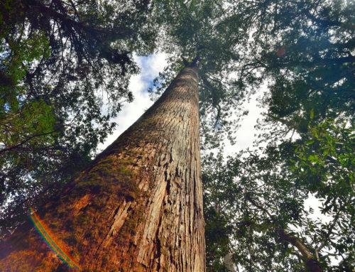 森林之島 99%進口材 |1%國產材的省思|華視新聞雜誌