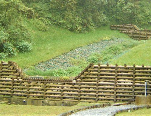 柳杉運用於森林土木工程