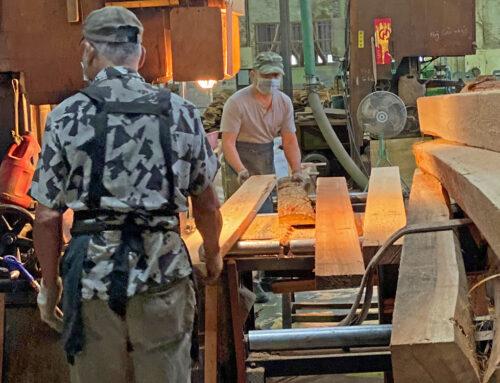 國際木材大漲與進口替代需求──後疫情時代的「國產材」機會/柳婉郁、李天裕